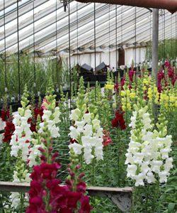 ST = Studley's Flower Gardens